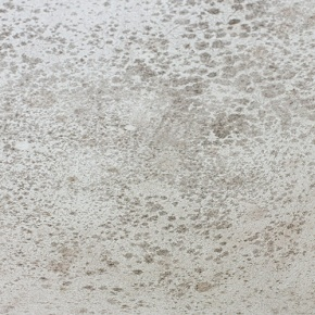 Mould-Stains-On-White-Surface
