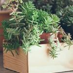 Las mejores plantas para la casa