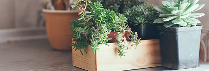 House plants, green succulents in a wooden box on a metal countertop, home decor retro style.