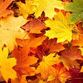 Como cuidar el jardín durante el otoño